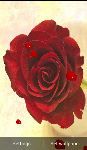 Note 4 Red Rose Wallpaper