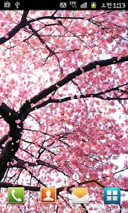 SAKURA ★BEST Cherry Blossom - screenshot thumbnail