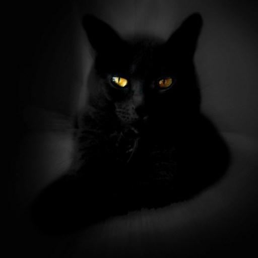Black Cat Live Wallpaper