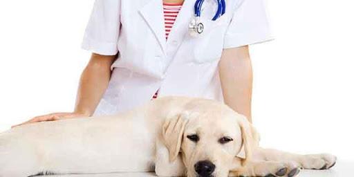 【免費健康App】하트동물병원-APP點子