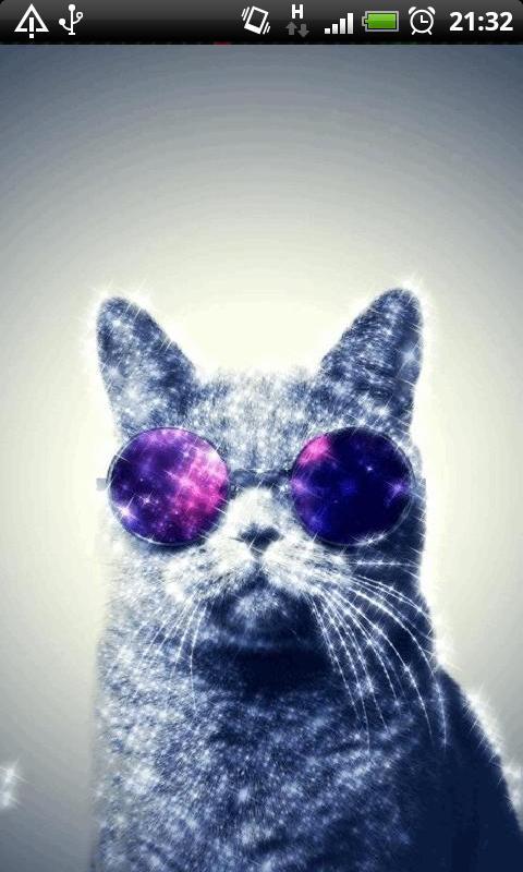 Cat Sunglasses Live Wallpaper Screenshot