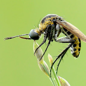 Alone by Balox Berhati Nyaman - Animals Insects & Spiders ( macro, nature, macro photography, nature up close, insect )