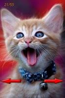 Screenshot of LOL Cats