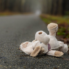 Lost... and forgotten... by Gerd Moors - Artistic Objects Toys ( lost, toy, teddy bear, fragile, path, baby,  )