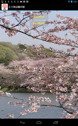 玩免費旅遊APP|下載神奈川県:三ツ池公園の桜(JP022) app不用錢|硬是要APP