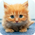 Cute Animals icon