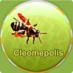 cleomepolis
