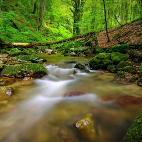 by Zoran Rudec - Landscapes Waterscapes ( stream, forest )