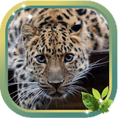 Leopard Best HD live wallpaper