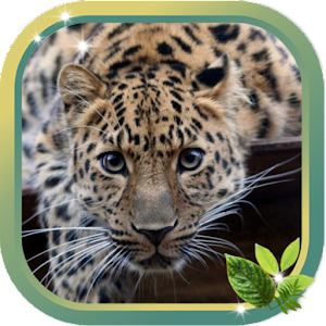 Leopard Best HD live wallpaper 個人化 App LOGO-硬是要APP