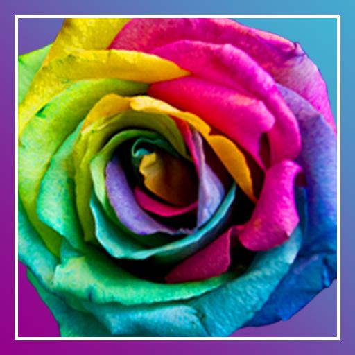 Roses PRO live wallpaper LOGO-APP點子