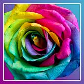 Roses PRO live wallpaper