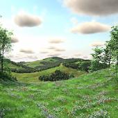 Hidden Garden Woodland