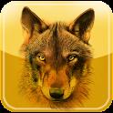 iFelix-WOLF icon