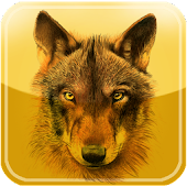 iFelix-WOLF