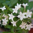 Penta (white)