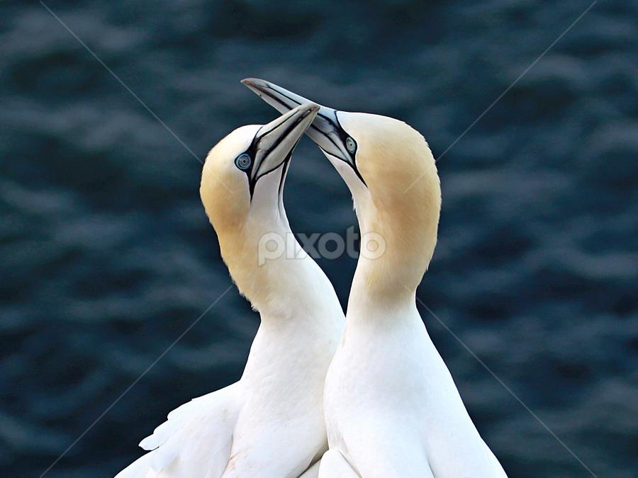 Lovers by Blaz Crepinsek - Animals Birds (  )