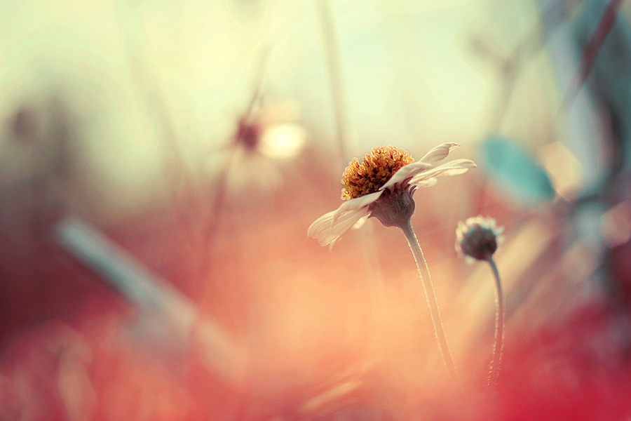 Sunny morning by Irfan Hikmawan - Flowers Flowers in the Wild ( macro, nature, flower )