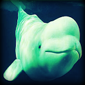 Beluga Whale Sound Effects logo