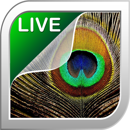 Feather Live Wallpaper LOGO-APP點子