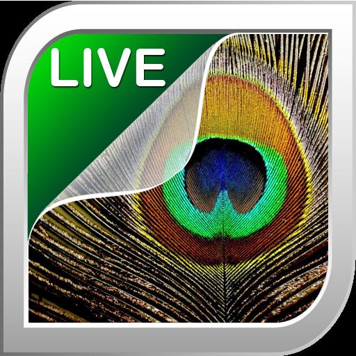깃털 라이브 배경 화면 個人化 App LOGO-硬是要APP
