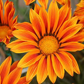 by Vijay Singh - Flowers Flower Gardens (  )