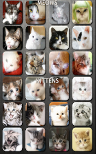 Cat n' Kitten Meow Sounds - screenshot thumbnail