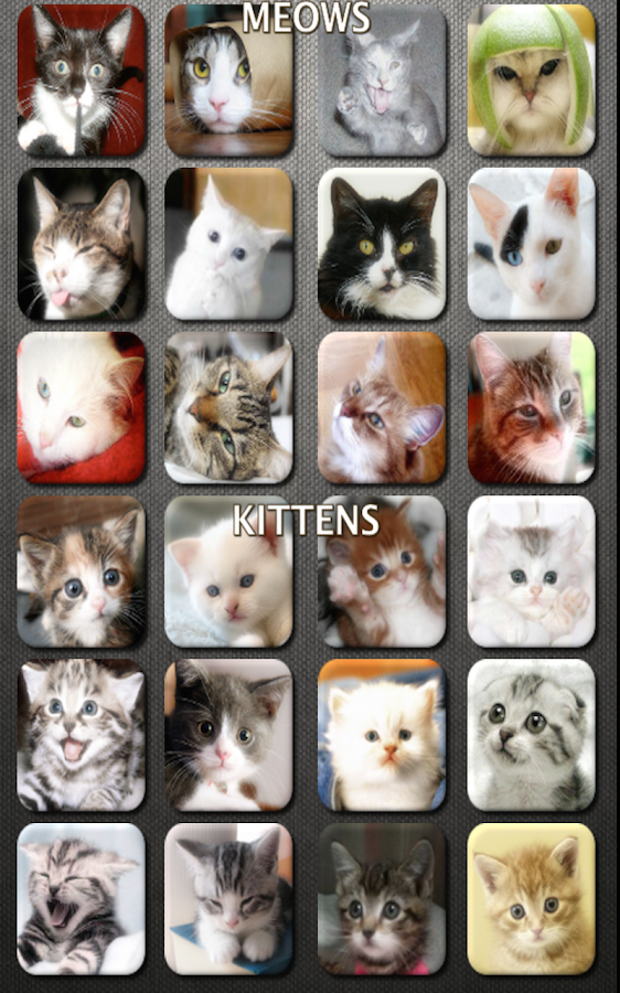 Cat and Kitten Fun Meow Sounds- screenshot