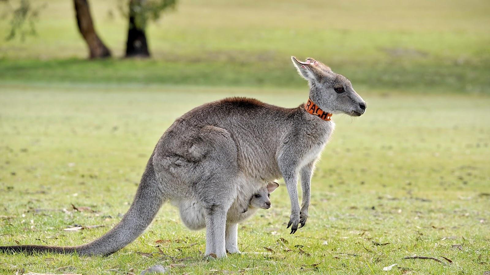 best us online casino kangaroo land