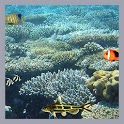 Aquarium Coral 3d LWP icon