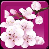 Cherry Blossom GoLauncher