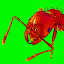 Ants Alive! Wallpaper 1.3 APK for Android