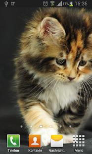 Котята живые обои screenshot thumbnail
