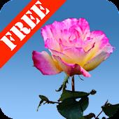 Rose Garden Free