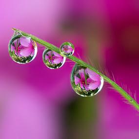 Natural drops by Citra Hernadi - Nature Up Close Natural Waterdrops