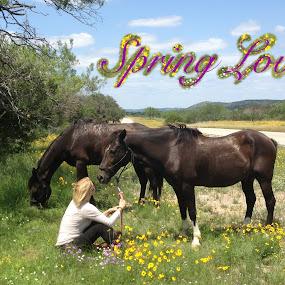Spring Love by Sandy Hurwitz - Typography Words ( pl, spring, txt, 334, eq )