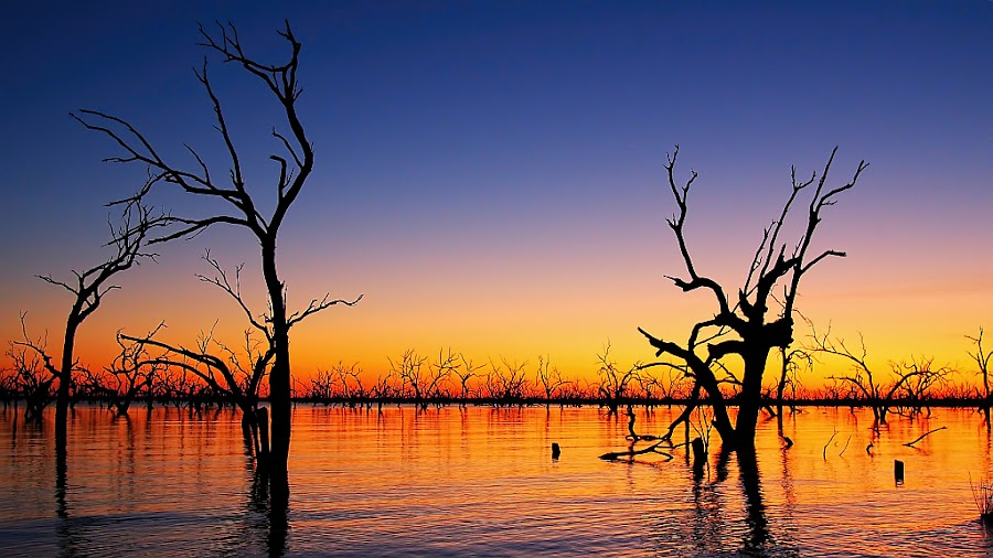 Lake Pamamaroo by Paula Mcmanus - Landscapes Waterscapes ( lake pamamaroo, dead trees, silhouette, sunset, paula mcmanus, trees, lake, sunrise,  )