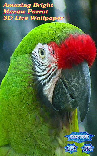 Amazing Bright Macaw Parrot