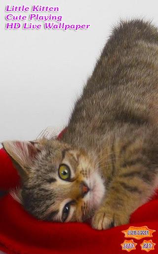 Little Kitten Cute Playing