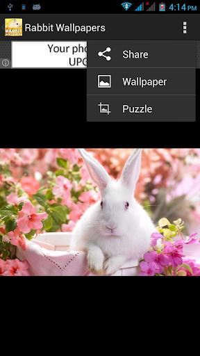 免費攝影App|Rabbit Wallpapers with Puzzle|阿達玩APP