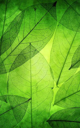 绿叶动态壁纸