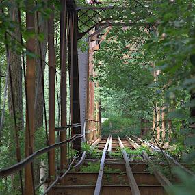 Old Deserted Bridge by Dale Fillmore - Buildings & Architecture Bridges & Suspended Structures ( pattern, nature, perspective, architecture, bridge,  )