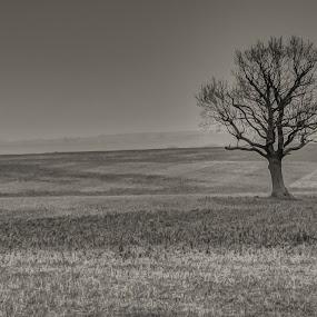 Tree by Steve Trigger - Black & White Landscapes