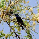 Sunbird - Purple-Sunbird