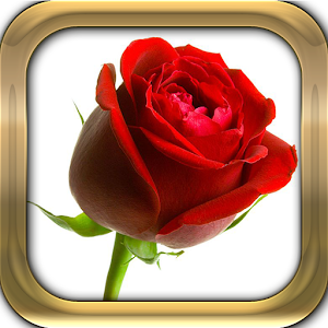 Red Rose Live Wallpaper Free Android App Market