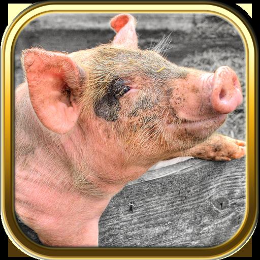 Pig Puzzle Games LOGO-APP點子