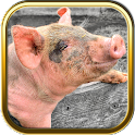 Pig Puzzle Games icon