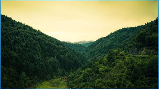 美麗的森林壁紙