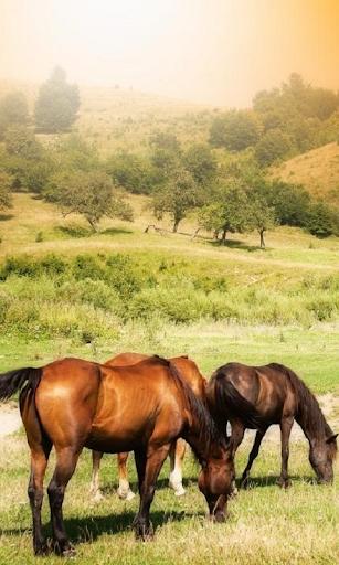 Horses Live Wallpaper br