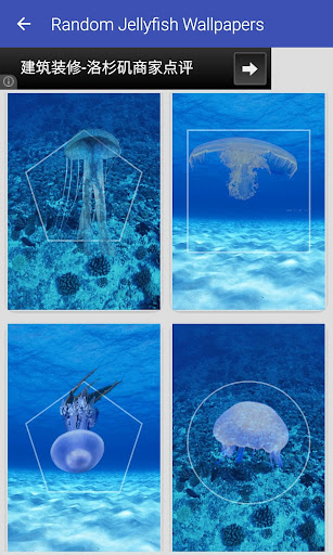Random Jellyfish Wallpapers